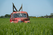 Red Car In Green Field