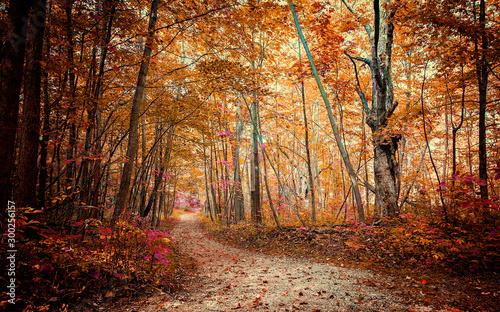 Valokuva autumn in the forest