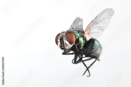 Fotomural Fly