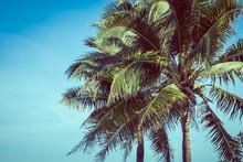 Low Angle Beautiful Coconut Pa...