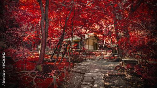 Photo sur Toile Rouge mauve autumn in park