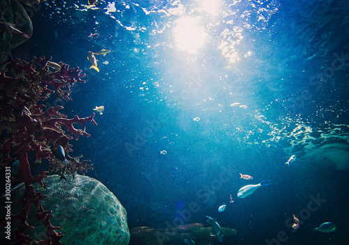 Photo  underwater scene with fishes and scuba divers