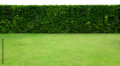 Long tree hedge and green grass lawn Canvas Print