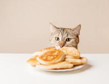 Domestic Cat Looking At Pancak...