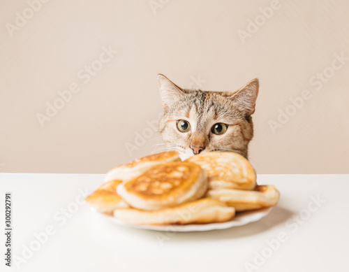 Fototapeta Domestic cat looking at pancakes.