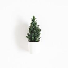 Christmas Tree On White Backgr...