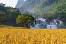 Ban Gioc Waterfall With Rice F...