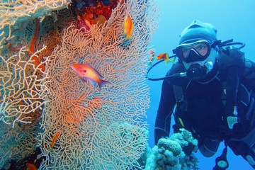 Man scuba diver and beautiful sea fan (gorgonia) coral and red coral fish Anthias close up.
