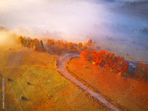Carta da parati Aerial top view of autumn forest and fog