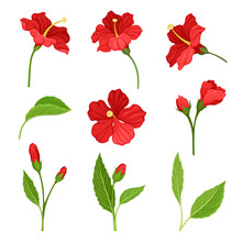 Beautiful Hibiscus Flowers And Leaves Vector Illustrated Set