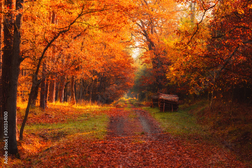 Recess Fitting Magenta Autumn forest road with logs on side and warm sun shining through golden foliage.