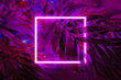 canvas print picture - Background made of palm leaves with neon light square.