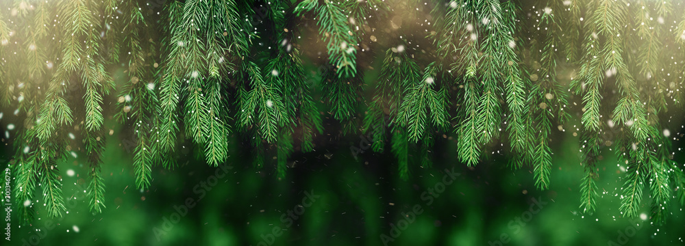 Fototapety, obrazy: Fir or pine christmas and new year holiday green  backdrop
