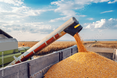 Poster Pays d Europe Machine for separating corn grains working on field and filling tractor trailer with corn. Autumn time. Husbandry concept.
