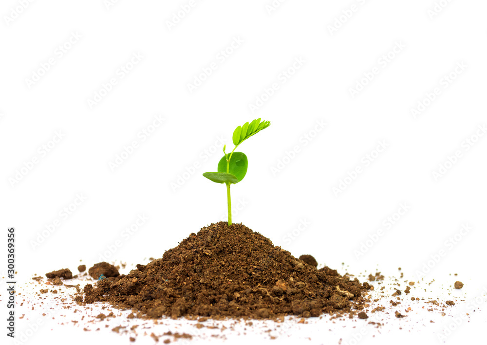 Fototapety, obrazy: Green sprout growing out from soil isolated on white background