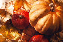 Banner Of Thanksgiving Pumpkins On Autumn Dry Foliage. Stock Photo Of A Solar Pumpkin - Harvest / Thanksgiving Concept.