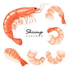 Collection Boiled Shrimp, Shri...