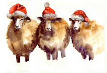 Cute Watercolor Sheep On The White Background. Happy New Year! Marry Christmas!