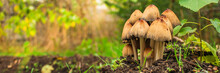 Mushrooms In The Meadow (fores...