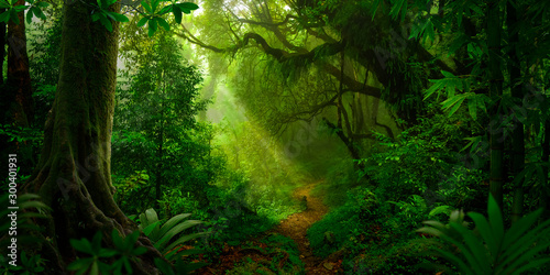 Fotografie, Obraz  Tropical rain forest in Asia