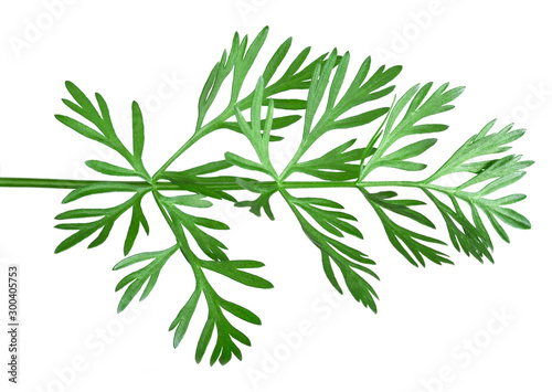 Wallpaper Mural Sprig of dill on the white background