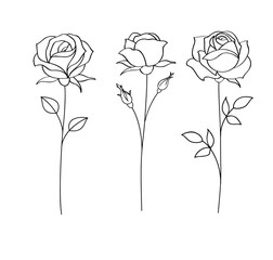Set of sketches, hand drawn rose, line art. Vector illustration
