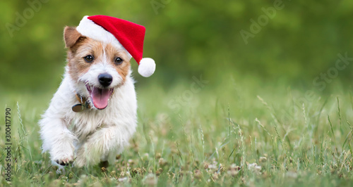 Obraz Holiday dog, happy smiling christmas pet puppy running with santa hat, web banner with copy space - fototapety do salonu