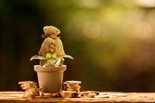 Farming The Tree As A Money Bag In Flower Pot With Growing Value And Coin Put On The Wood On Sunlight In The Public Park, Saving Money And Loan For Asset Management For Investment Concept.