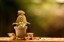 Farming The Tree As A Money Ba...