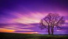Trees On A Grass Covered Field With The Colorful Sky