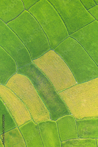 Autocollant pour porte Les champs de riz Aerial view of the green and yellow rice field landscape different pattern at morning in the northern thailand