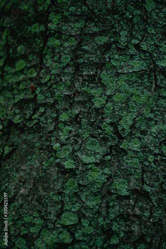 Texture tree - 300425597