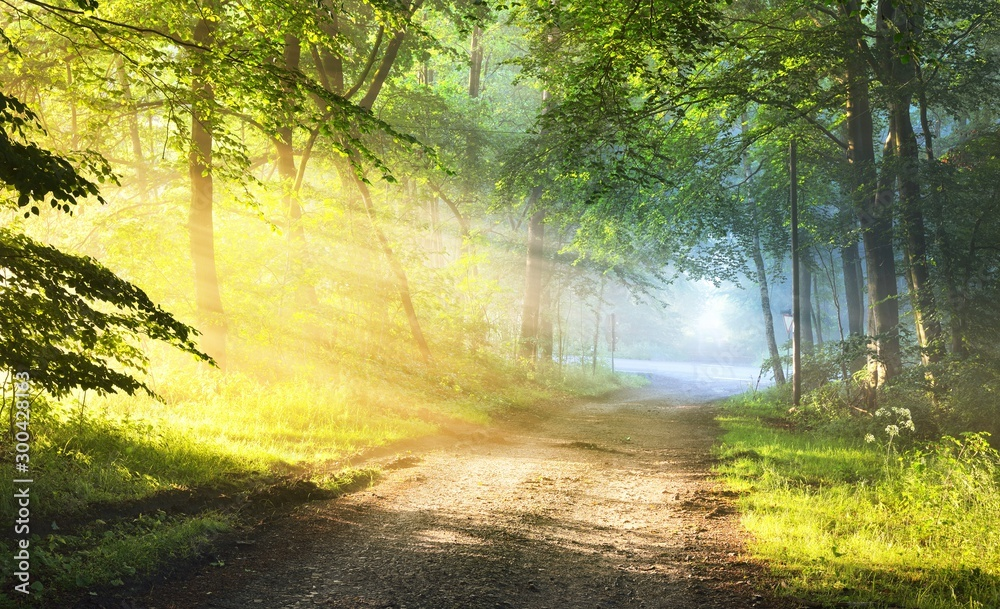 Fototapeta Gravel road in a misty foggy forest with sun rays. Osnabruck, Germany