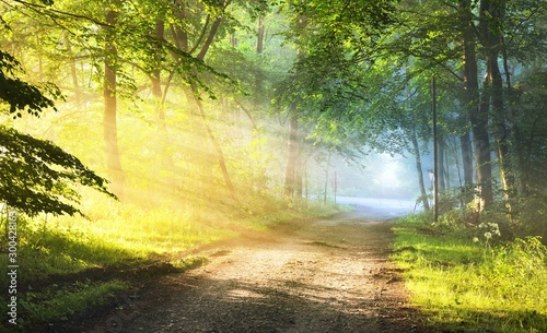 Poster Jaune de seuffre Gravel road in a misty foggy forest with sun rays. Osnabruck, Germany