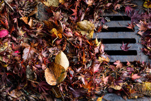 Flooding Threat, Fall Leaves Clogging A Storm Drain On A Wet Day