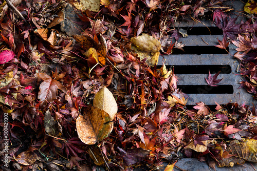 Photo  Flooding threat, fall leaves clogging a storm drain on a wet day
