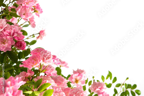 Pink roses arrangement with copy space on white