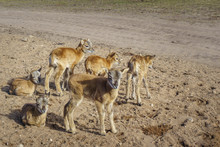 Cute And Friendly Deer Herd Of Safari Deer Park In Northen Europe During Feeding With Grain At Sunny Morning With Blue Cloudy Sky