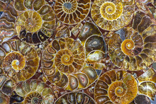 Closeup Of An Ammonite Prehistoric Fossil - Detail