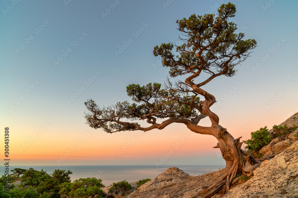 Fototapety, obrazy: Lonely tree on the rock above the sea
