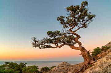 Fototapeta Krajobraz Lonely tree on the rock above the sea