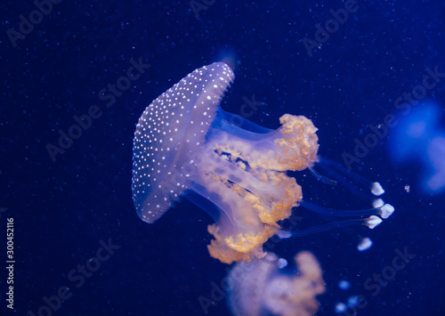 Jellyfish in the deep blue ocean with bright illuminance Canvas Print