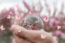 Butterflies Flying Around A Woman's Hand Holding A Glass Ball Reflecting Pink Flowers