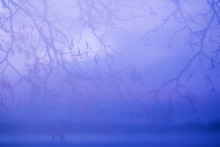 Foggy Scene Background With Silhouette Of Linden Tree Branches In The Mist. Abstract Mystigue Purple Background With Sunset Blur Sky