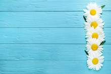 Beautiful Chamomile Flowers On Blue Wooden Background, Top View. Space For Text