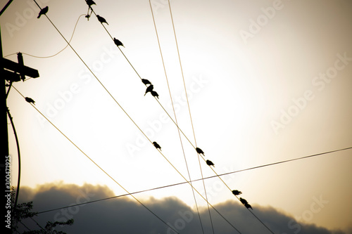Valokuva  birds perched on the wires of the electrical installation