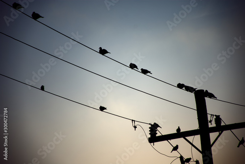 birds perched on the wires of the electrical installation Canvas-taulu