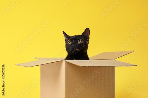 Cute black cat sitting in cardboard box on yellow background Fototapeta