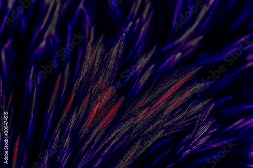 Beautiful abstract colorful blue black red and pink feathers on dark background Wallpaper Mural