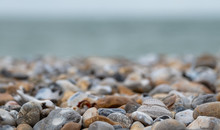 Venericor Bivalve Shell Amongst Pebbles On The Beach At Bracklesham Bay Near East Wittering, West Sussex UK.